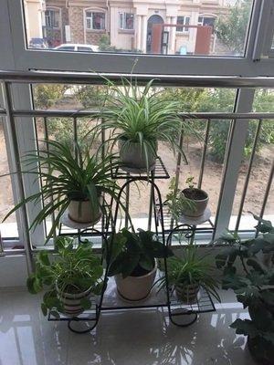 European lron flower rack multi-storey balcony living room flower shelf-B by Flower racks (Image #1)