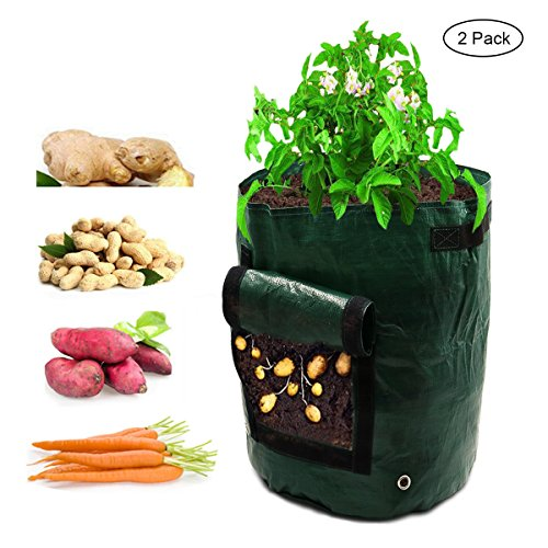 Planter Vegetable Garden - 6