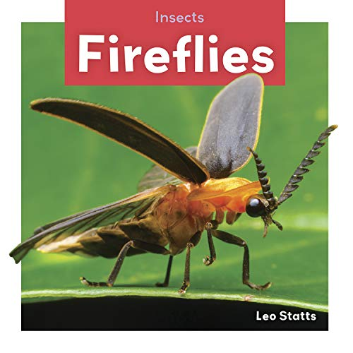 Fireflies (Insects) -