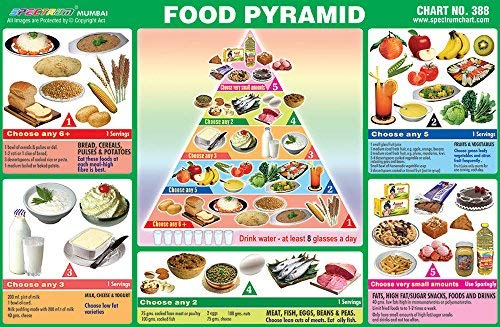 Pre - Primary Kids Educational Learning Pack Of 25 Food Pyramid Pictorial Sticker