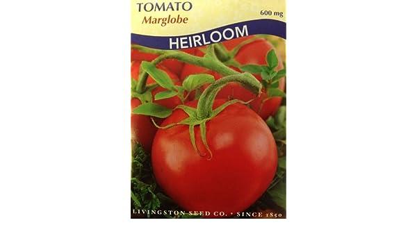 Marglobe Tomato Seeds Heirloom 600 Milligrams