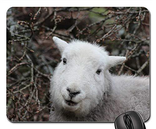 Mouse Pad - Sheep Herdwick Animal Nature Lamb Cumbria Breed