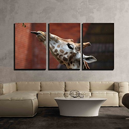 Rothschild Giraffe (Giraffa Camelopardalis Rothschildi) Wildlife Animal x3 Panels