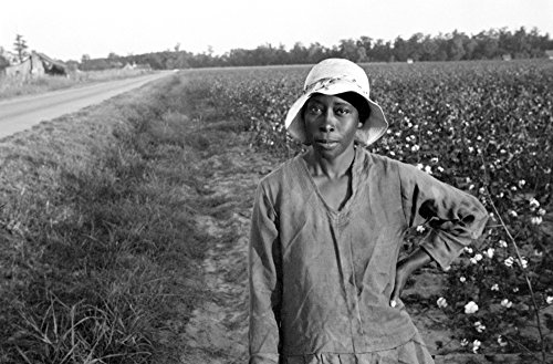 Woman In Field 1935 Nwoman Standing In Cotton Field Pulaski County Arkansas Photograph By Ben Shahn 1935 Poster Print by (24 x 36) (Photographs Of Shahn Ben)