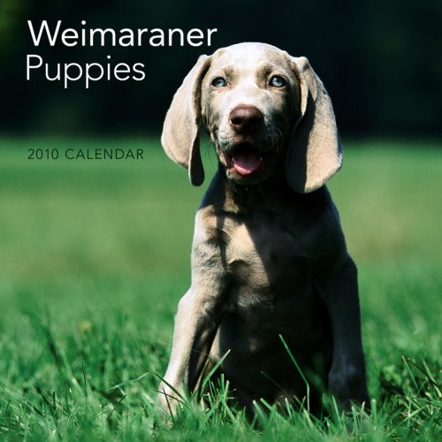 2010 Calendar Mini Dog - Weimaraner Puppies 2010 Mini Wall