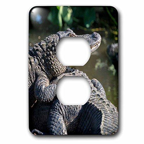 3dRose Danita Delimont - Alligators - USA, Florida, Orlando, alligators basking in the sun. - Light Switch Covers - 2 plug outlet cover - In Outlet Orlando