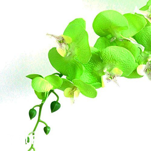 Promotion!Green Orchid Bonsai Flowers Formaldehyde Air Purification Seeds Phalaenopsis Orchids,100 Seeds/Lot,#6MP214