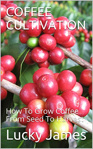 COFFEE CULTIVATION: How To Grow Coffee From Seed To Harvest