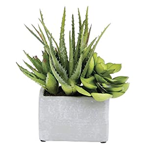 "Agave/Echeveria Potted Plants Green Plastic - 11"" H 2"