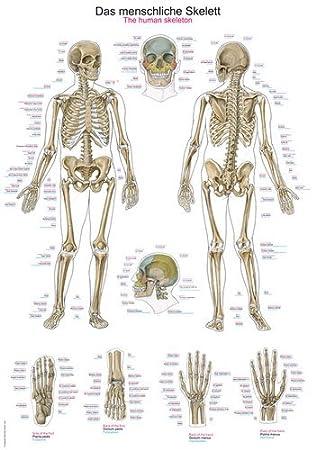 AL102 Anatomical Chart \