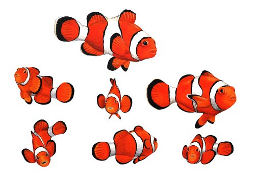Walls of the Wild Clown Fish Decal Stickers Wall Mural - Clown Fish Wall