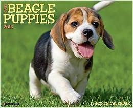 Just Beagle Puppies 2015 Wall Calendar Calendar – June 15, 2014