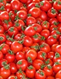 Tomatoes Notebook large Size 8.5 x 11 Ruled 150 Pages