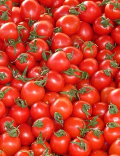Tomatoes Notebook large Size 8.5 x 11 Ruled 150 Pages by Wild Pages Press