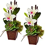 Nearly Natural 1445-S2-WH Cattleya Orchid & Succulent Arrangement (Set of 2)
