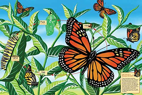 Cobble Hill Life Cycle of a Monarch Butterfly 48 Piece Floor Puzzle ()
