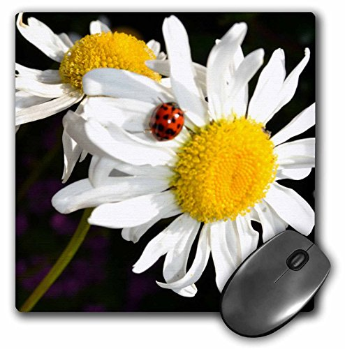 3dRose LLC 8 X 8 X 0.25 Inches Daisies with a Ladybug Mouse Pad - Ladybug Mouse Pad