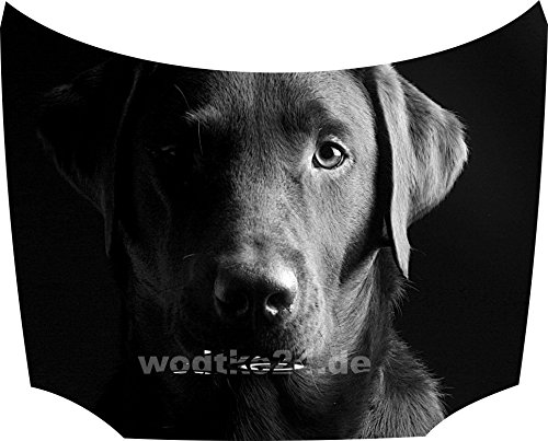 Bonnet Sticker Labrador: