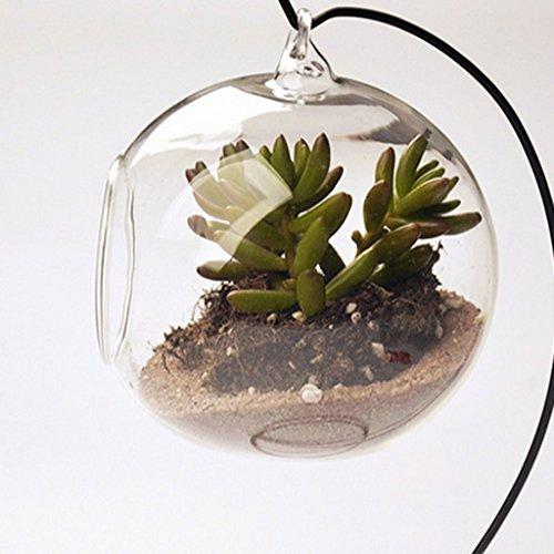 Vase suspendu en verre transparent boule pour plantes fleurs d coration de jardin maison - Boule en verre pour plante ...