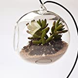 Clear Glass Hanging Vase Bottle for Plant Flower Decorations Dia. 4 Inch