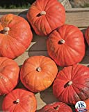 buy Cinderella's Carriage F1 Pumpkin 15 Seed Aas Winner 25-35 Lbs Have 5-7 Per Plant now, new 2019-2018 bestseller, review and Photo, best price $4.85