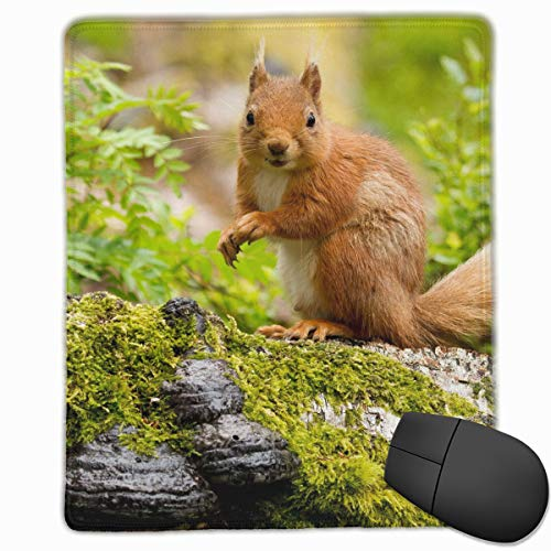 (FriendEver Gray Squirrel On Stone Mouse Pads,Non Slip Mouse Mat Pad,Washable Stitched Edge Mousepad for Gaming,Computer,Laptop,7inX8.7in)