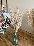 """3 stems Pampas Grass Royal Natural 43"""" Extra Fluffy - Dried Boho Wedding Home Decor Centerpiece Bridal Bouquet"""