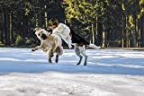 Home Comforts Canvas Print Wallpaper Dogs Dogs Pet Fight Play Wallpaper Snow Stretched Canvas 32 x 24