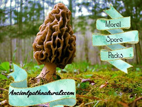 (Morel Mushroom Spore Growing Kit 3 Pack - Best Outdoor Morel Mushroom Growing Kit - Grow The Most Desirable Mushrooms Oudoors - No Experience Required - 100% Cruelty Free)