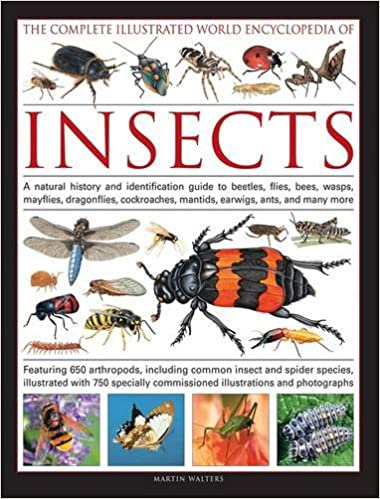 The Complete Illustrated World Encyclopedia of Insects: A