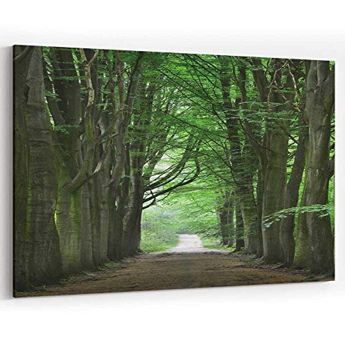 Actorstion Walkway in a Green Spring Beech Forest in Leuven Canvas Prints Wall Art,Wall Art Canvas