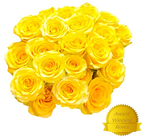 Flowers for delivery on Amazon Bouquet of 50 Yellow Fresh Roses Delivered with Free Flower Food Packet. Long Stem Rose in Bud Form. Guaranteed Best Flower Gift for Birthday Anniversary Wedding ()