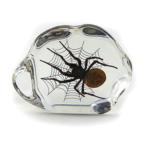 Spider Desktop Decoration (House Paperweight)