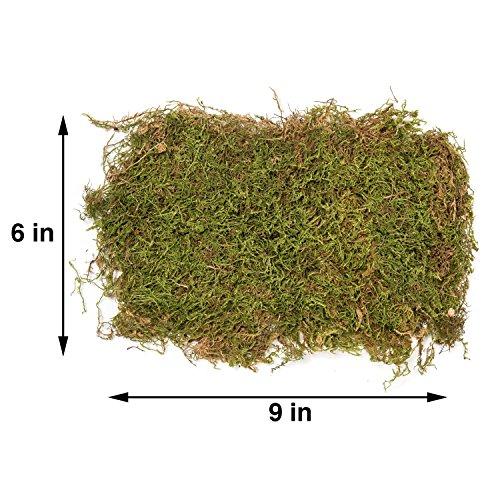 Hot Sale H Potter Terrarium Kit Small Includes Premium Live Moss And