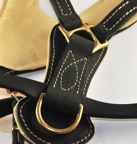 Dean and Tyler Royal Stud Solid Brass Hardware Leather Dog Harness, Black, Large - Fits Girth Size: 31-Inch to 41-Inch