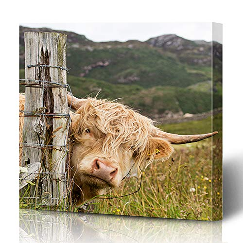 Ahawoso Canvas Prints Wall Art 16x16 Inches Brown Highland Scottish Highlander Scotland Cow Africa Red Agriculture Big Cattle Cute Design Face Decor for Living Room Office Bedroom