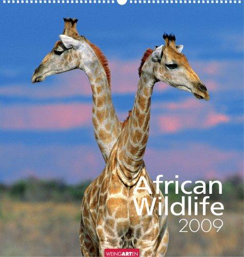 Weingarten-Kalender African Wildlife 2009