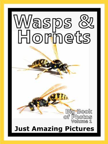 just-wasp-hornet-insect-photos-big-book-of-photographs-pictures-of-wasps-hornets-insects-vol-1