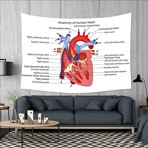 smallbeefly Educational Wall Tapestry Medical Structure of The Hearts Human Body Anatomy Organ Veins Cardiology Home Decorations for Living Room Bedroom 80