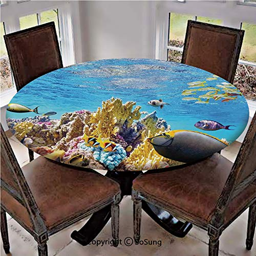 - Elastic Edged Polyester Fitted Table Cover,Tropical Exotic Coral Reefs Fish School Jellyfish Underwater Wild Marine Life Theme,Fits up to 36
