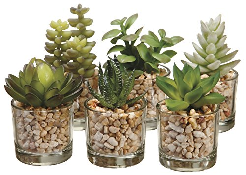 set-of-6-succulent-plants-in-glass-votive-holders-artificial-succulents-with-pebble-accents