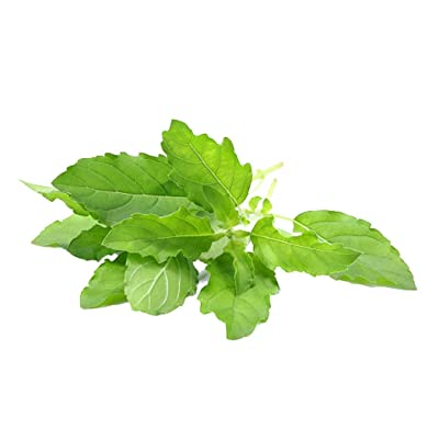 MABES WAREHOUSE Thai Holy Basil 350 Seeds - Tulsi Holy Basil Seeds, Ocimum Sanctum Seeds, Green Leaf Thai Basil Plant, Aromatic Perennial Tulasi Plant, Herb Seeds for Planting : Garden & Outdoor
