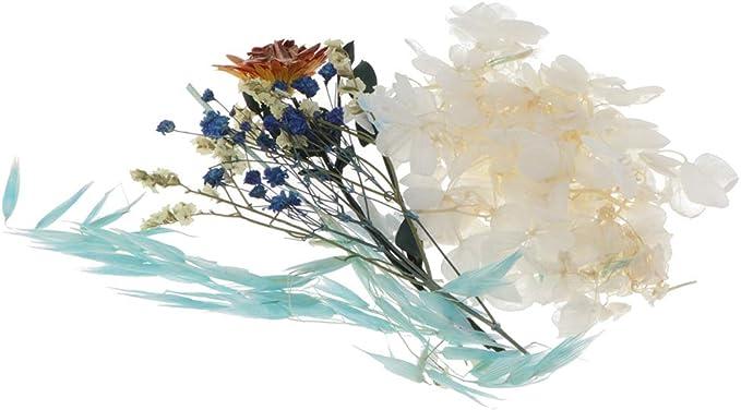 Hellery Nat/ürliche Echte Getrocknete Gepresste Bl/ätter Blumen F/ür Kunsthandwerk Kerze Seifenkarten 2pcs A