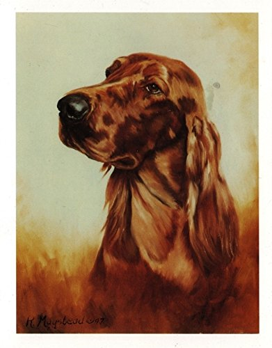 Irish Setter Head Study Notecards