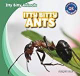 Itty Bitty Ants, Jasper Baer, 1433998769
