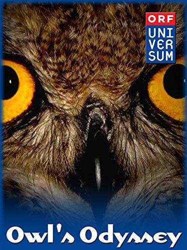 (Owl's Odyssey)