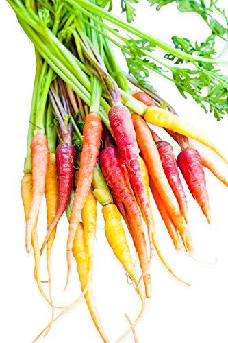 Homegrown Carrot Seeds, 1000 Seeds, Baby Gourmet Rainbow Mixture - No GMO ()