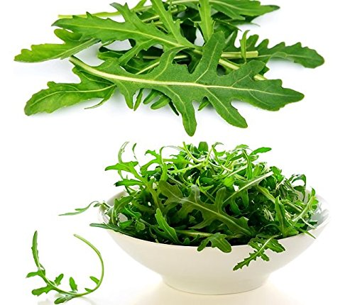 250+ ORGANICALLY Grown Arugula Roquette Rocket Seeds Heirloom Non-GMO Delicious and Healthy, Eruca Sativa, from USA
