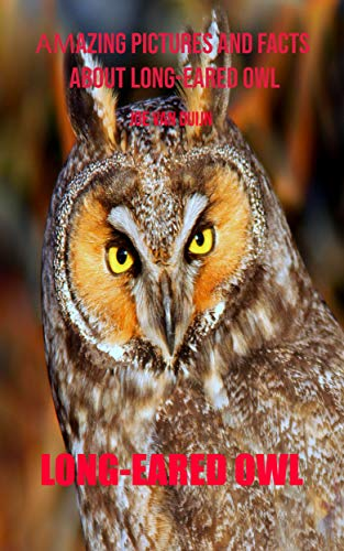 Long-eared owl: Amazing Pictures and Facts About Long-eared owl