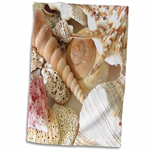 3dRose-Florene-Shells-Florida-Keys-Seashells-Towel